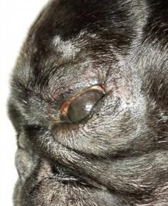 Tamvé oko - černé oko