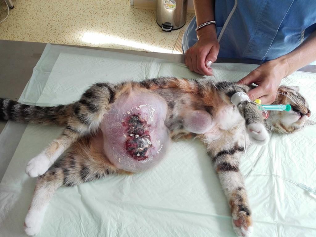 Беременной снится что она рожает котят 9